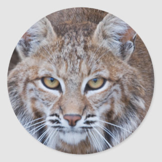 Bobcat Face Classic Round Sticker