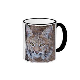 Bobcat Face Mugs