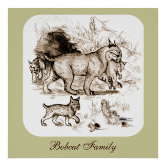 Bobcat Family Poster