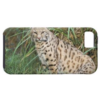 Bobcat (Felis rufus) iPhone 5 Case