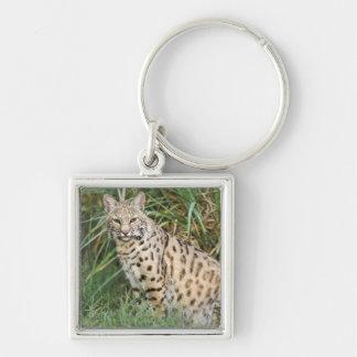 Bobcat (Felis rufus) Key Chains
