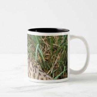 Bobcat (Felis rufus) Two-Tone Coffee Mug