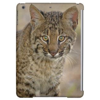 Bobcat, Felis rufus, Wakodahatchee Wetlands, iPad Air Cases