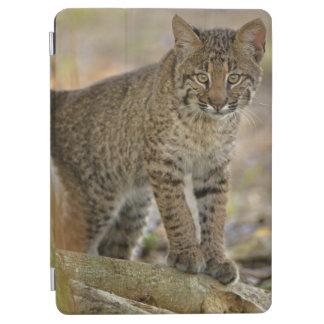 Bobcat, Felis rufus, Wakodahatchee Wetlands, iPad Air Cover