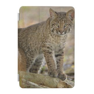 Bobcat, Felis rufus, Wakodahatchee Wetlands, iPad Mini Cover