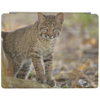 Bobcat, Felis rufus, Wakodahatchee Wetlands, iPad Smart Cover