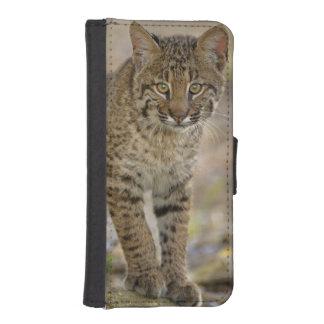 Bobcat, Felis rufus, Wakodahatchee Wetlands, iPhone 5 Wallets