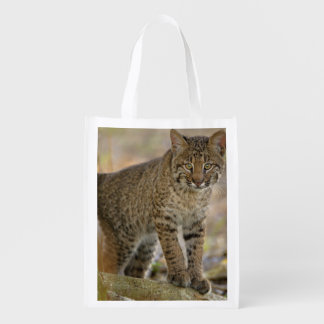 Bobcat, Felis rufus, Wakodahatchee Wetlands, Reusable Grocery Bag
