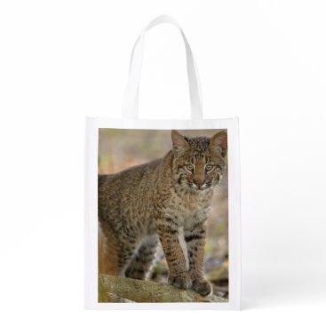 Beach Themed Bobcat, Felis rufus, Wakodahatchee Wetlands, Reusable Grocery Bag