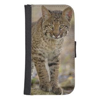 Bobcat, Felis rufus, Wakodahatchee Wetlands, Samsung S4 Wallet Case