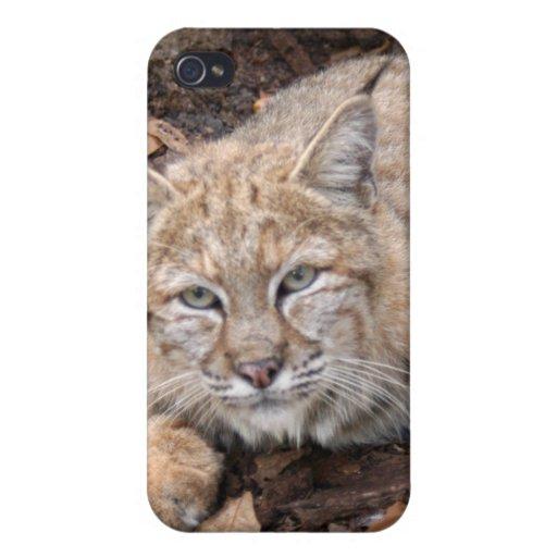 Bobcat i iPhone 4/4S case