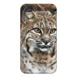 Bobcat i iPhone 4 cover