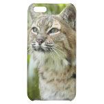 Bobcat i iPhone 5C cases
