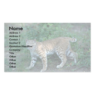 Bobcat in summer meadow business card