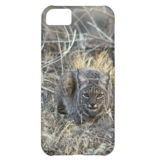 Bobcat in the Grass Case For iPhone 5C