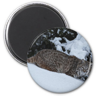 Bobcat in the Snow 2 Inch Round Magnet