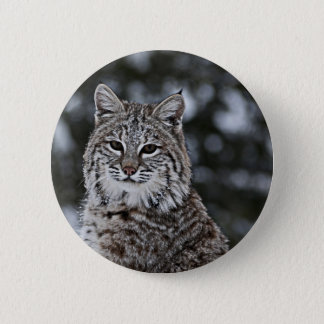 Bobcat in the Snow Pinback Button