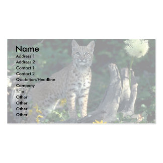 Bobcat in yellow daisies and bear grass in bloom business card template