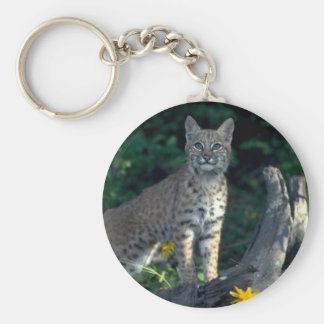 Bobcat in yellow daisies and bear grass in bloom key chains