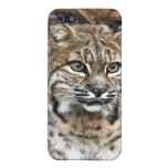 Bobcat iPhone Case Cover For iPhone 5