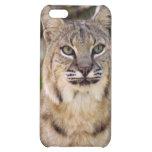 Bobcat iPhone Case iPhone 5C Cover