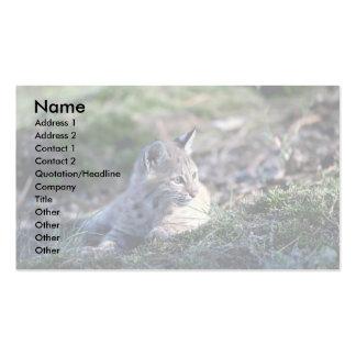 Bobcat-kitten Business Card Template