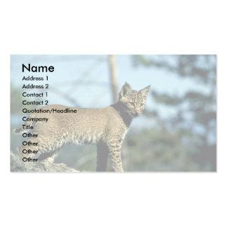 Bobcat-kitten Business Card Templates