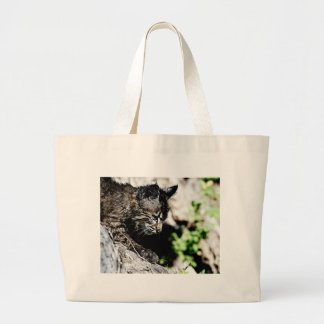 Bobcat Kitten on laying on a Hill Bag