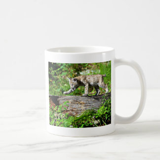 Bobcat Kitten on the Prowl Coffee Mug