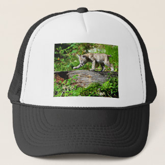 Bobcat Kitten on the Prowl Trucker Hat