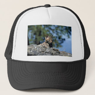 Bobcat-kitten Trucker Hat