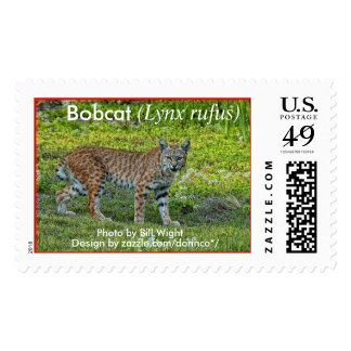 Bobcat (Lynx rufus) 1 Postage