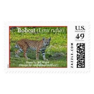 Bobcat (Lynx rufus) 1 Postage Stamp