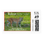 Bobcat (Lynx rufus) 1 Postage Stamps