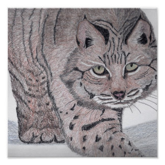 """Bobcat on Snow"" by artist Tony Nelson Poster"