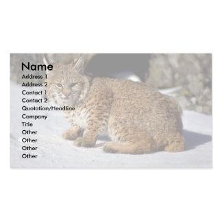 Bobcat on snowy rocks business card template