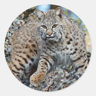 Bobcat on the Rocks Classic Round Sticker