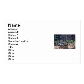 Bobcat Photo Business Card Template