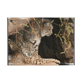 Bobcat Photo Covers For iPad Mini