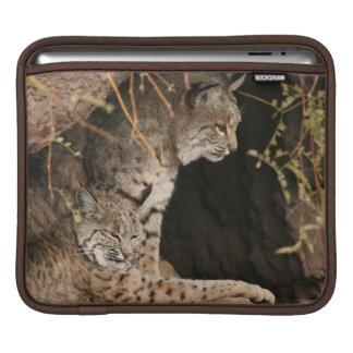 Bobcat Photo iPad Sleeve
