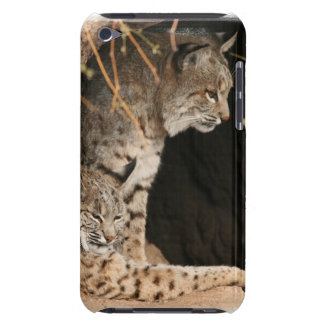 Bobcat Photo iTouch Case Barely There iPod Cases