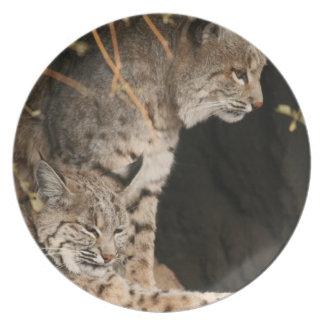 Bobcat Photo Plate