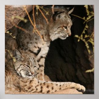 Bobcat Photo Print