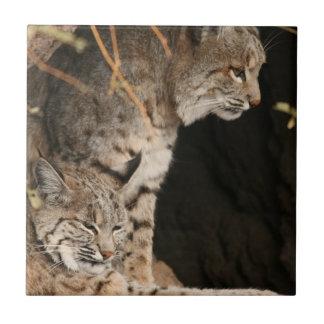Bobcat Photo Tile