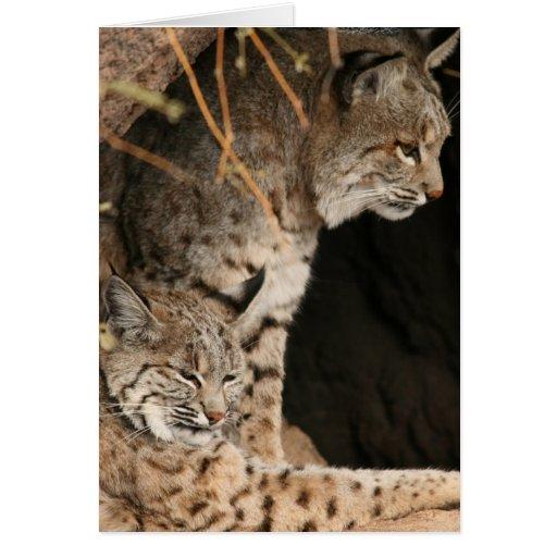 Bobcat Photos Greetign Card