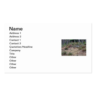 Bobcat Picture Business Card
