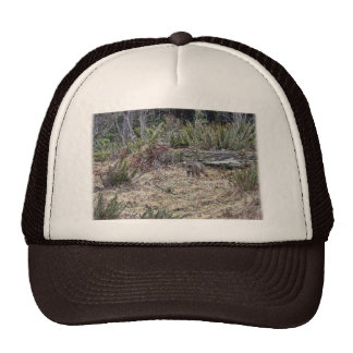Bobcat Picture Mesh Hat