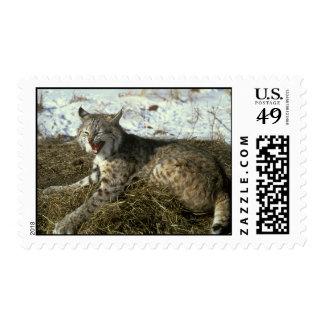 Bobcat Postage Stamp