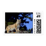 Bobcat Postage Stamps