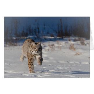 Bobcat running in snow card